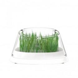 MOBOLI 秘密森林貓草餐碗 Secret forest-bowl